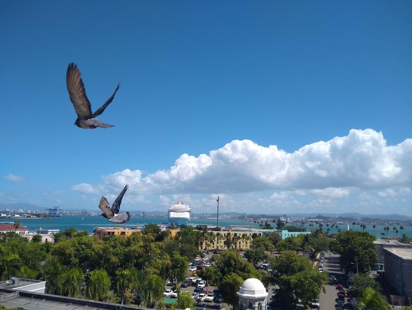 Pigeons Flying over Old San Juan